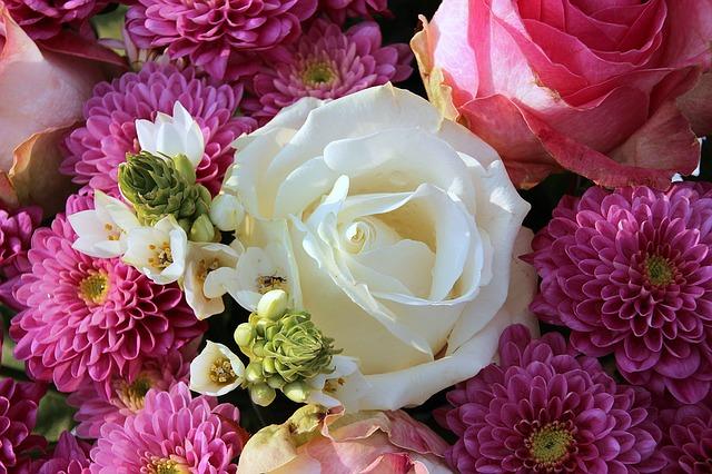 bílá růže